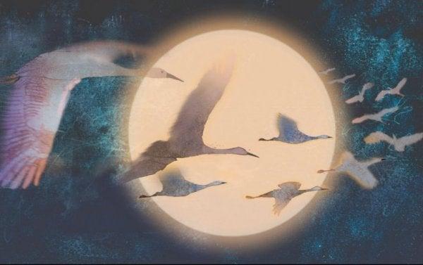 月夜を飛ぶ白鳥