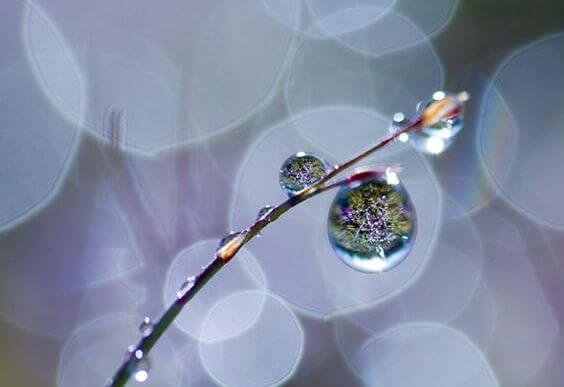 枝先の水滴