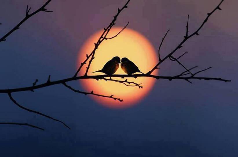 夕暮れの二羽のとり