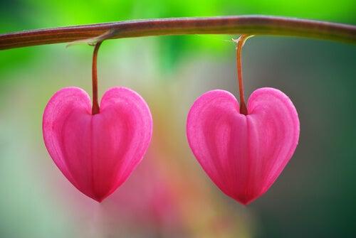 砂漠に咲く花:愛を認識するには