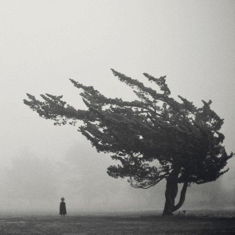 嵐の中の木