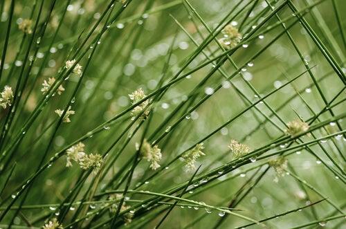 朝露に濡れた植物