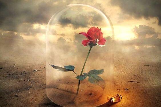 ガラスの中のバラ