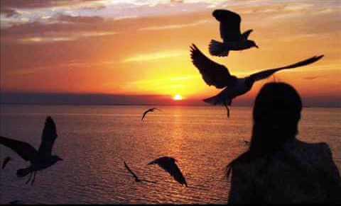 夕暮れの海辺の女性と鳥