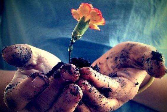 手のひらの上の土と花