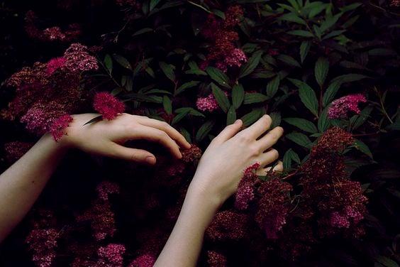 赤い花を触る手