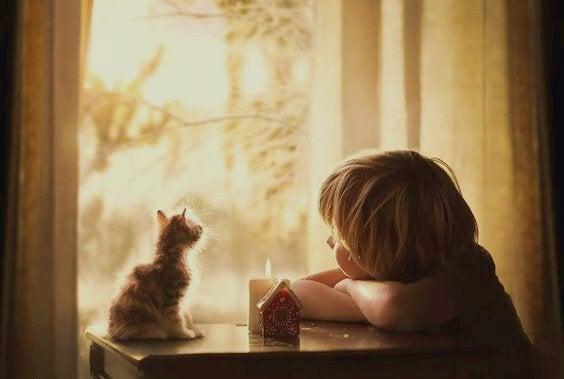 外を眺める子猫と少年