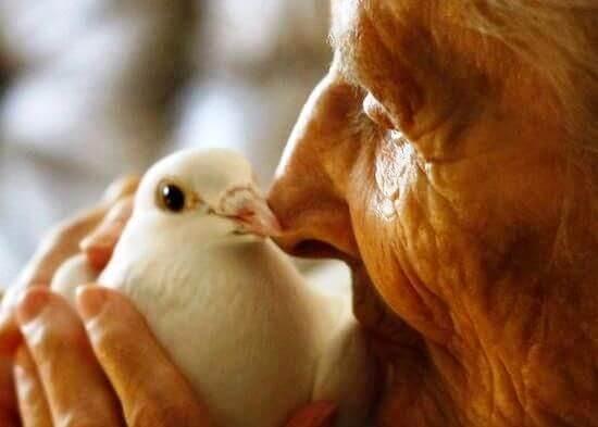 ハトにキスをする老人