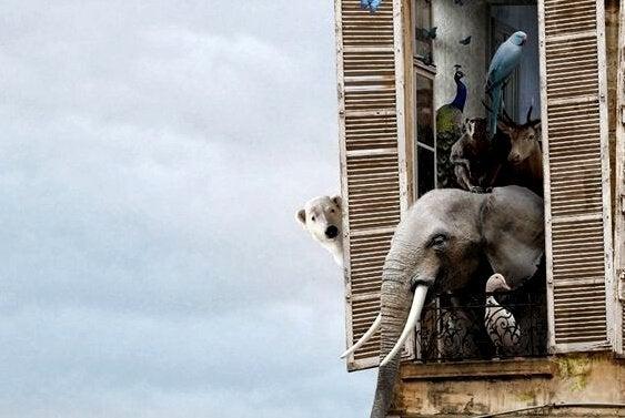 窓からのぞく動物たち