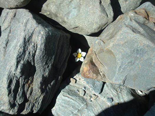 岩の間に咲く花