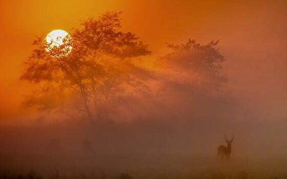 夕暮れにたたずむ鹿