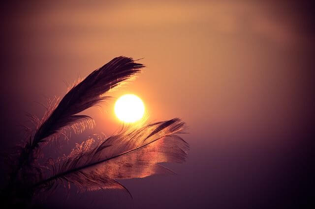 夕暮れと鳥の羽