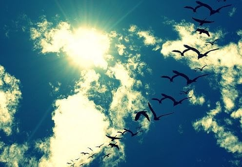 空飛ぶ鳥の列