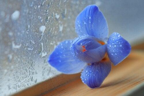 窓際の青い花
