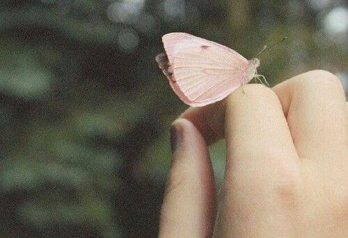 指にとまる蝶