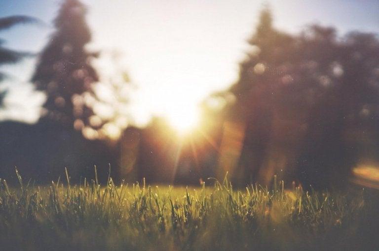 芝生にそそぐ太陽
