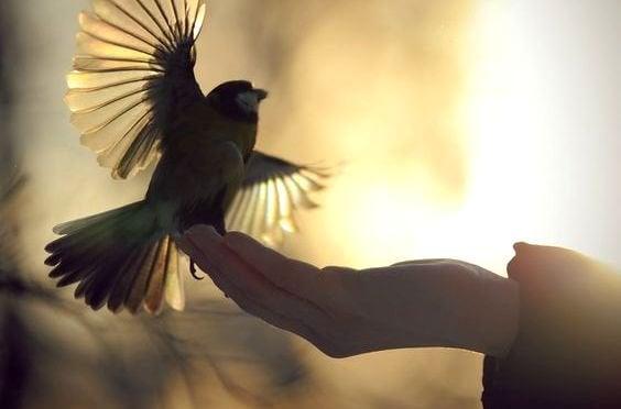 手にとまる鳥