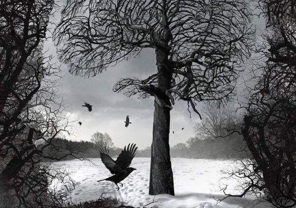 冬の森とカラス