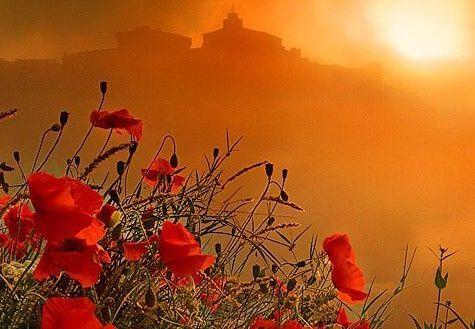 夕暮れの赤い花