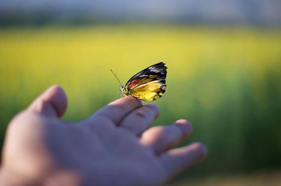 指先に留まる蝶