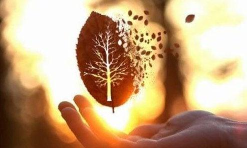 手のひらの上で散っていく葉