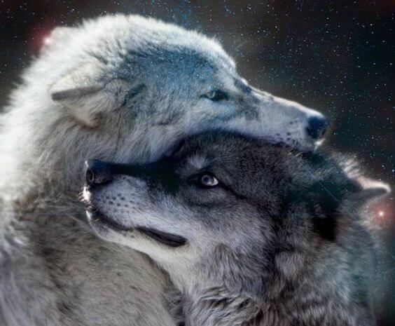 二頭のオオカミ
