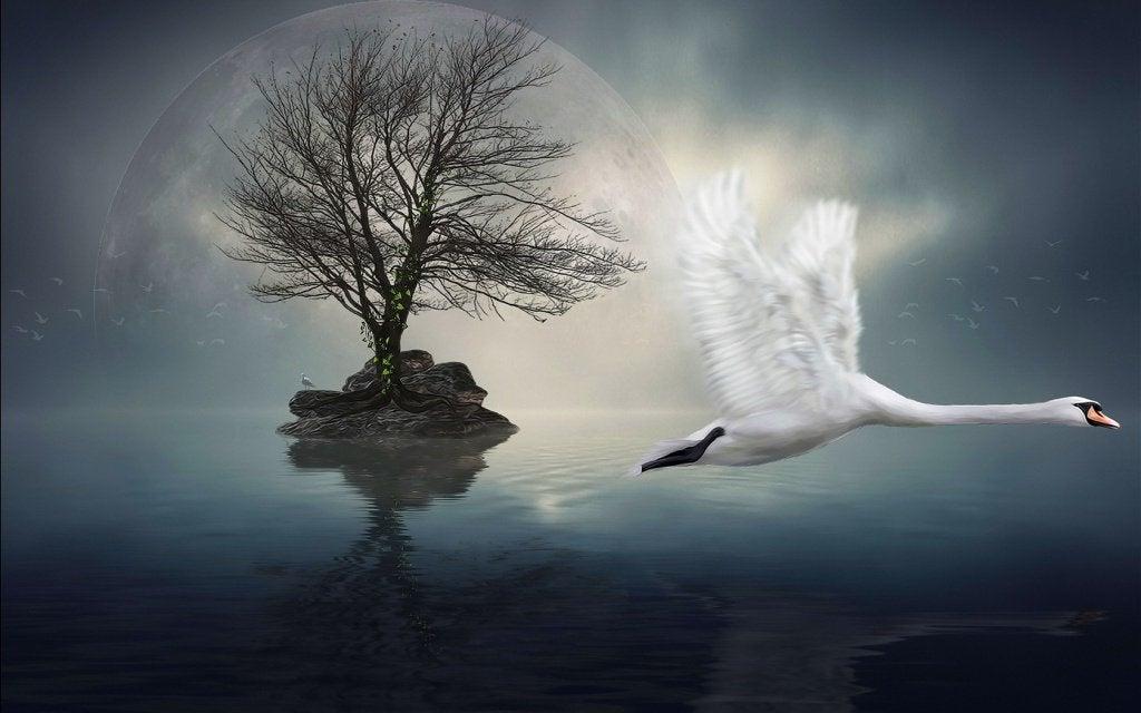 湖の上を飛ぶ白鳥