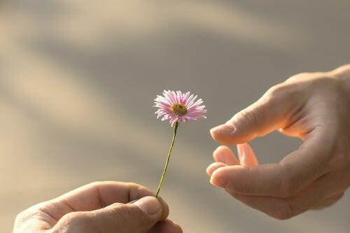 一輪の花を手渡す
