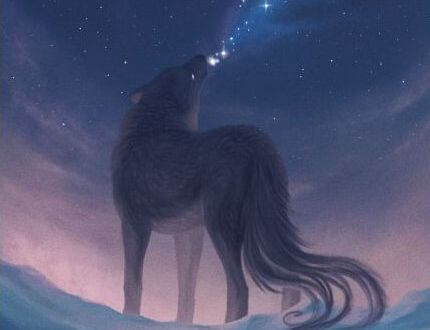 夜空を見上げるオオカミ