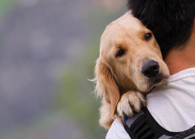飼い主に抱かれた犬