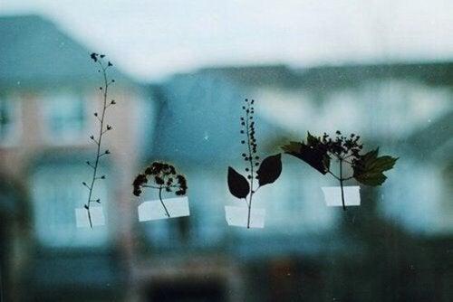 窓に葉っぱ