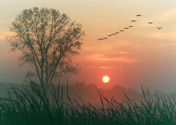 夕日と鳥の列