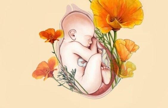 子宮の中の赤ちゃん