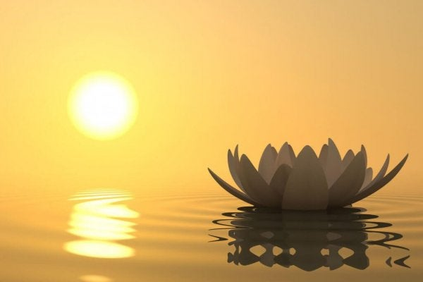夕日と睡蓮の花