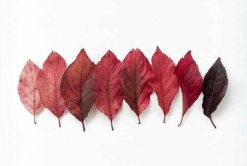 赤から黒のグラデーションの葉
