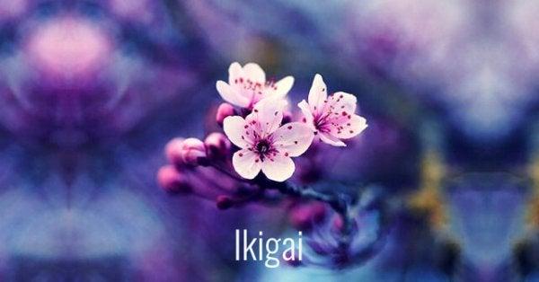 生きがい、梅の花