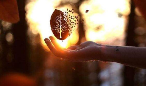 手のひらで崩れていく落ち葉