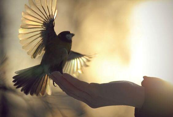手に乗る鳥