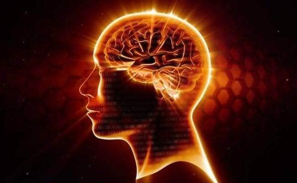 オメガ3:最高の神経保護薬