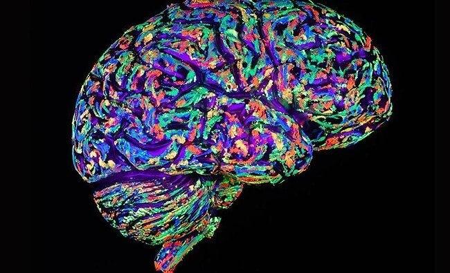 カラフルな脳