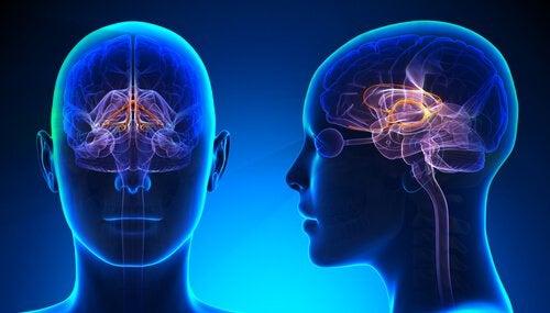 大脳辺縁系