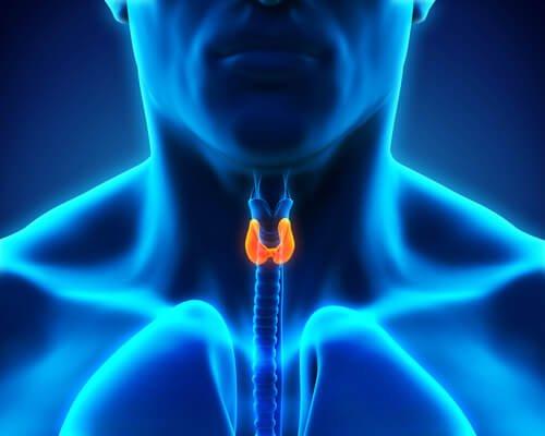 甲状腺異常があるときに体に起こること