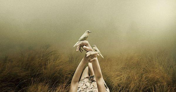 手に乗る小鳥