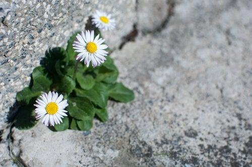 岩の間の花