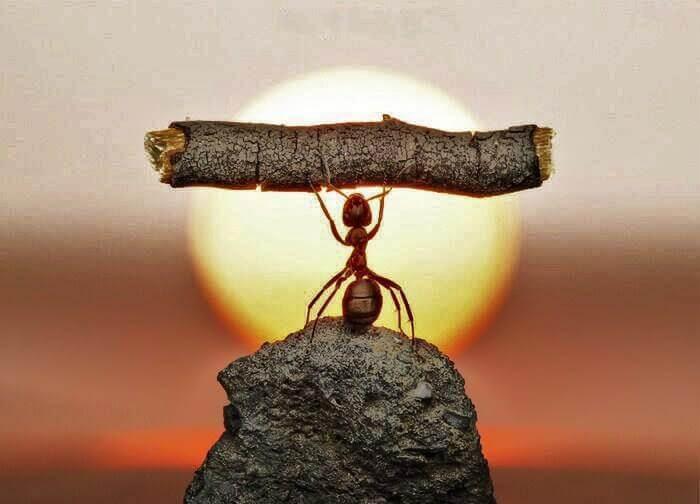 アリが木を持ち上げる