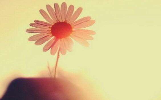 陽に照らされているピンクの一輪の花