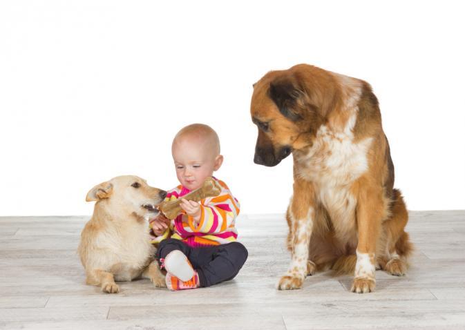 イヌと赤ちゃん