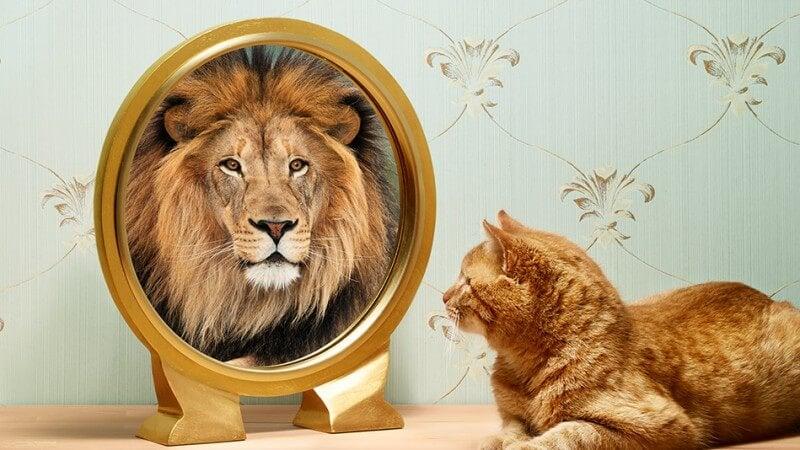 鏡に映ったライオンを見る猫