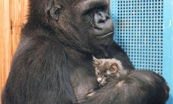 ココと子猫