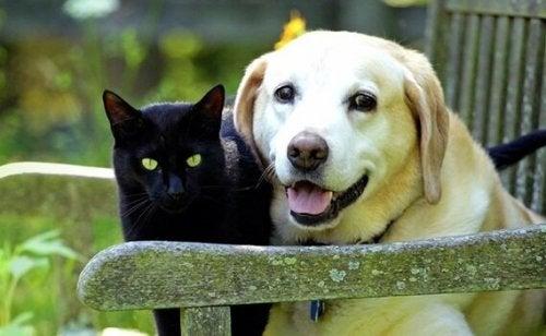 ペットの死:友達だった動物を亡くした悲しみ